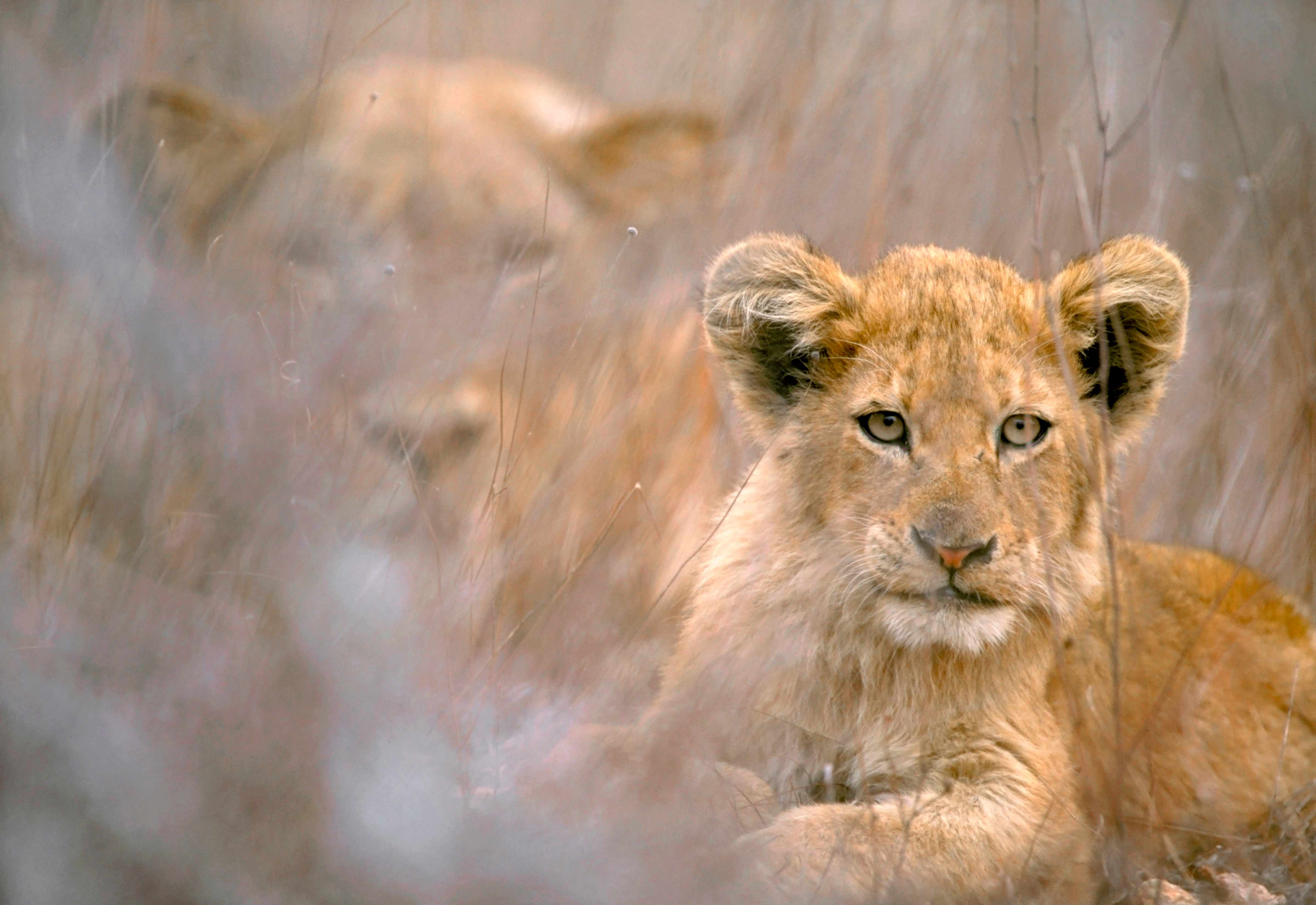 20 cool backgrounds of animals that will blow you away. lions, bats