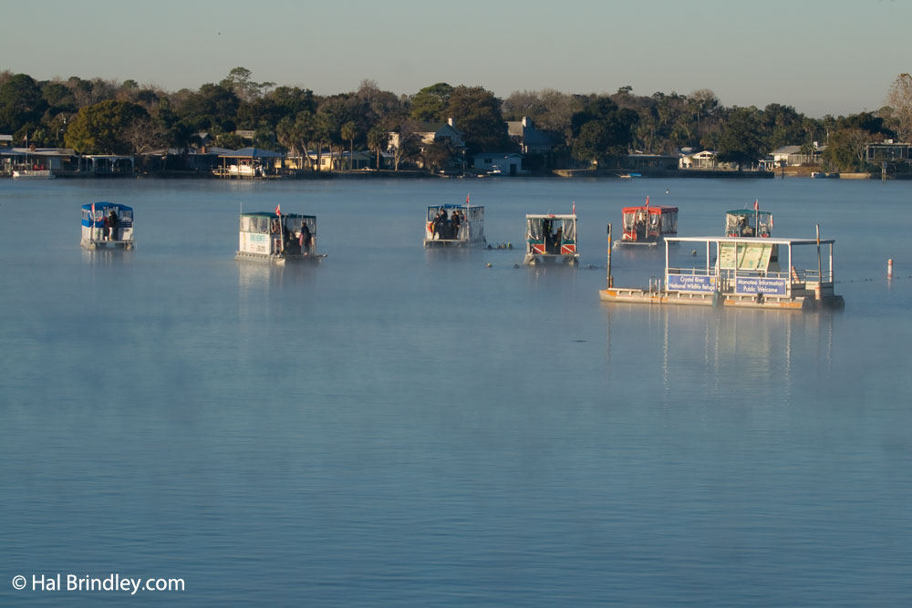 Manatee Tour Boats at King Spring, Crystal River Florida