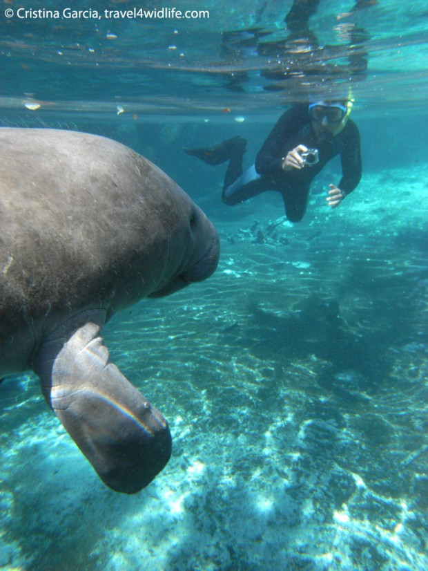 Hal shooting video of manatees with the GoPro HD Hero 2
