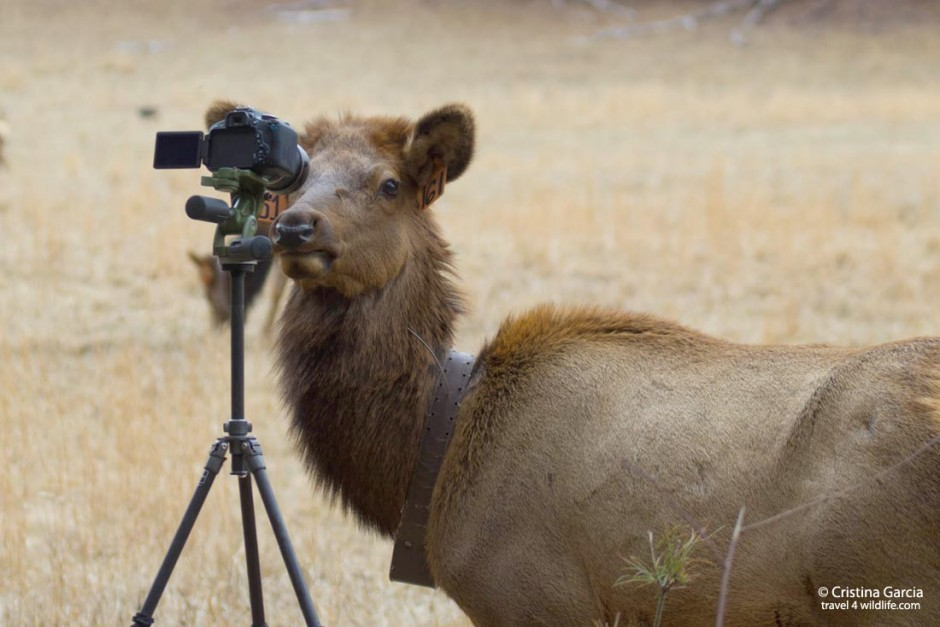 Some animals want to have their picture taken. Do them a favor and go on a wildlife photo safari.