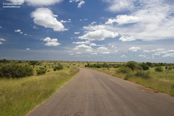 Driving through central Kruger