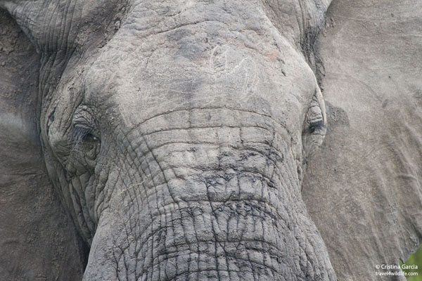 Elephant face close-up