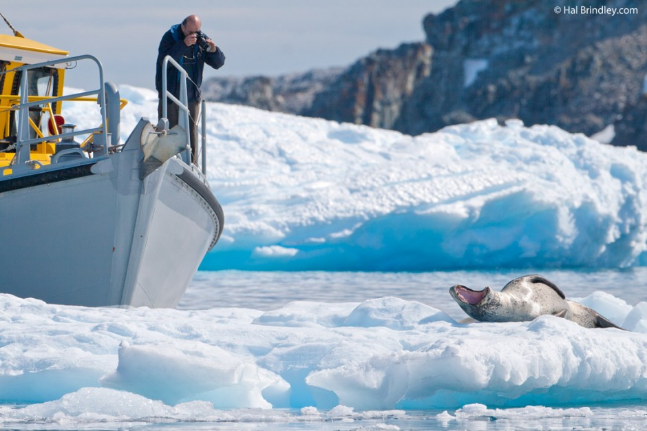 Viewing leopard seals on Antarctica