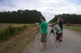 Photographing black bears
