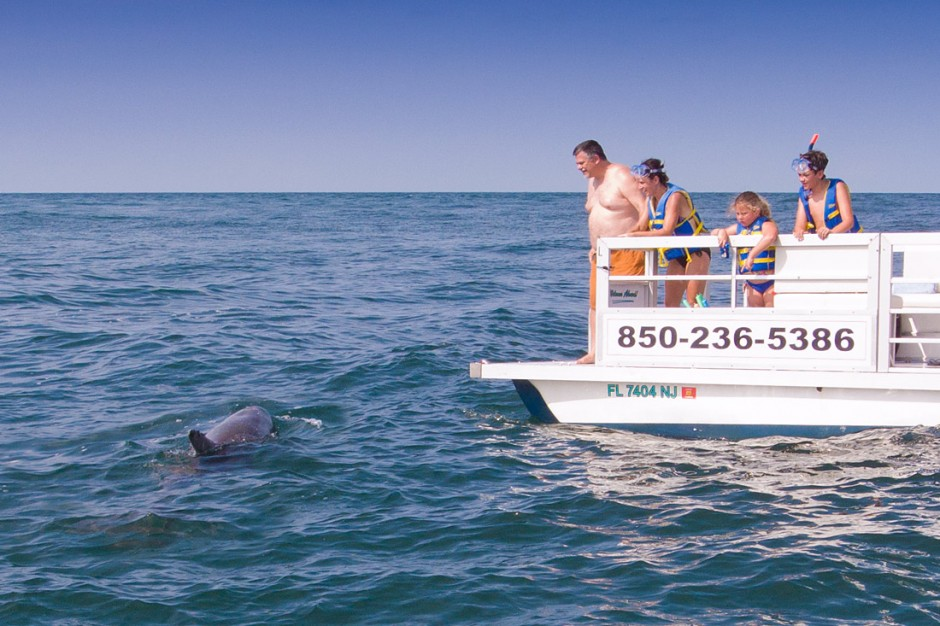 A dolphin tour boat watching dolphins