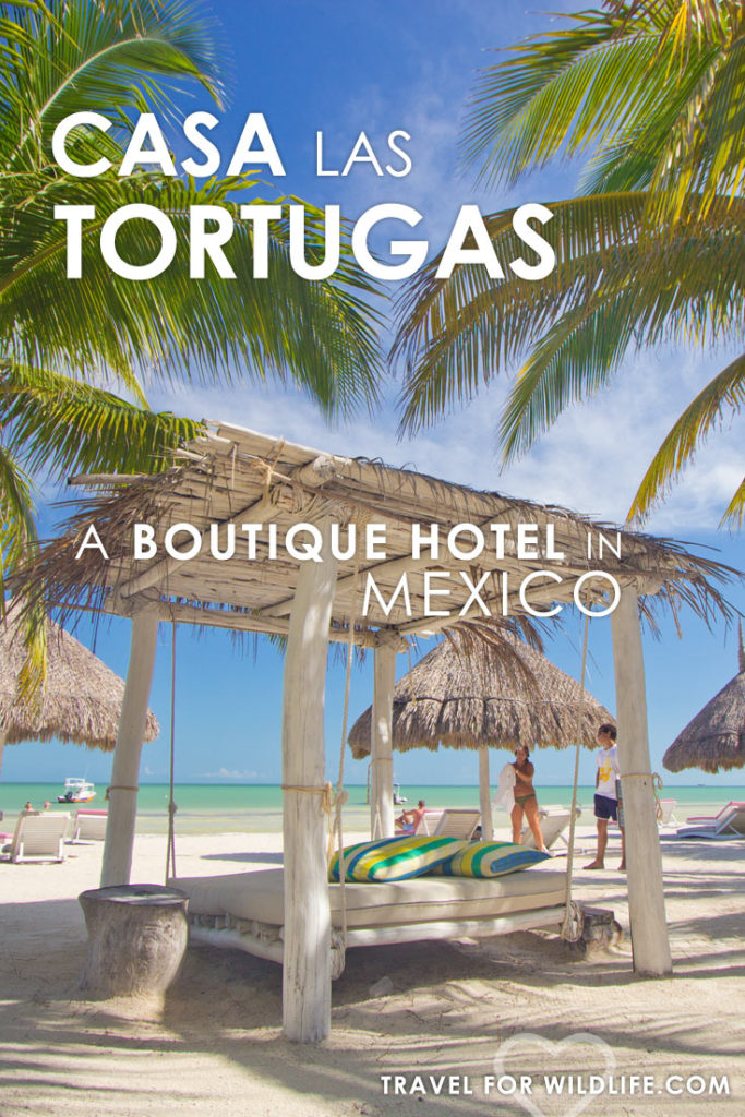 When visiting Holbox Island, make sure you stay at Casa Las Tortugas boutique hotel. You'll get the best sea views in the island! plus those beach beds are to die for!
