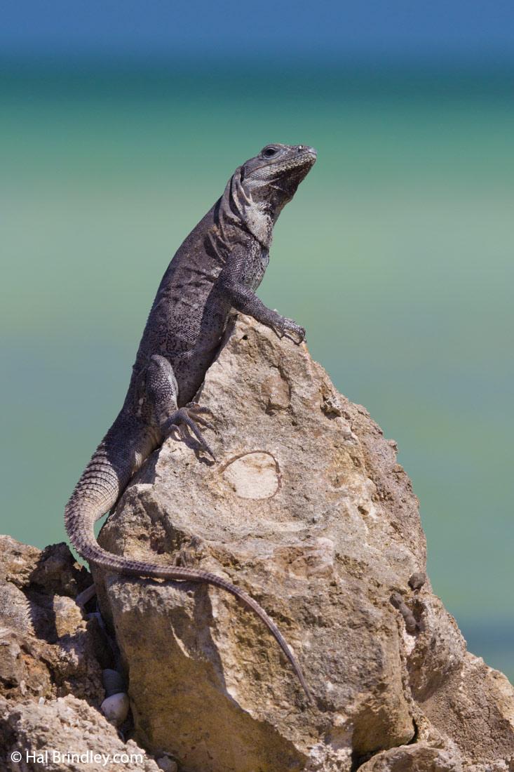 wind river subtitles geckos