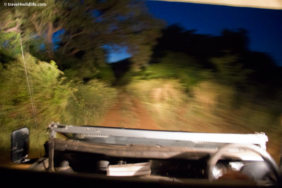 Dashing down a back road in Kruger on a guided night drive.