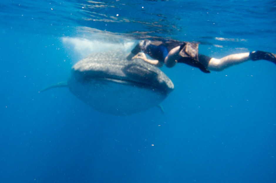 The pic that Cristina snapped just before the whale shark dove under me.