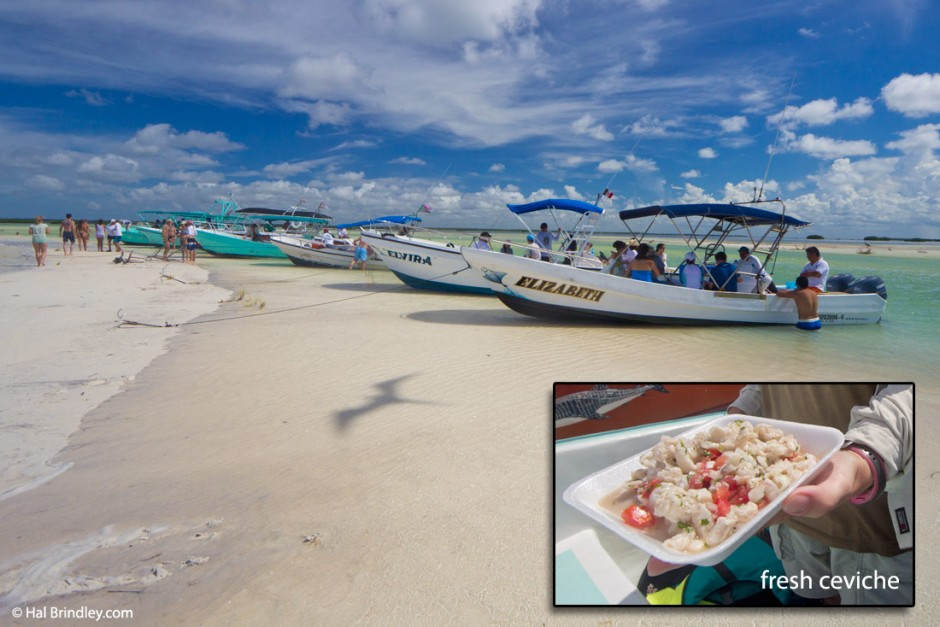 Whale Shark tour boats park for lunch in the river and eat fresh ceviche while a Magnificent Frigatebird cruises overhead.
