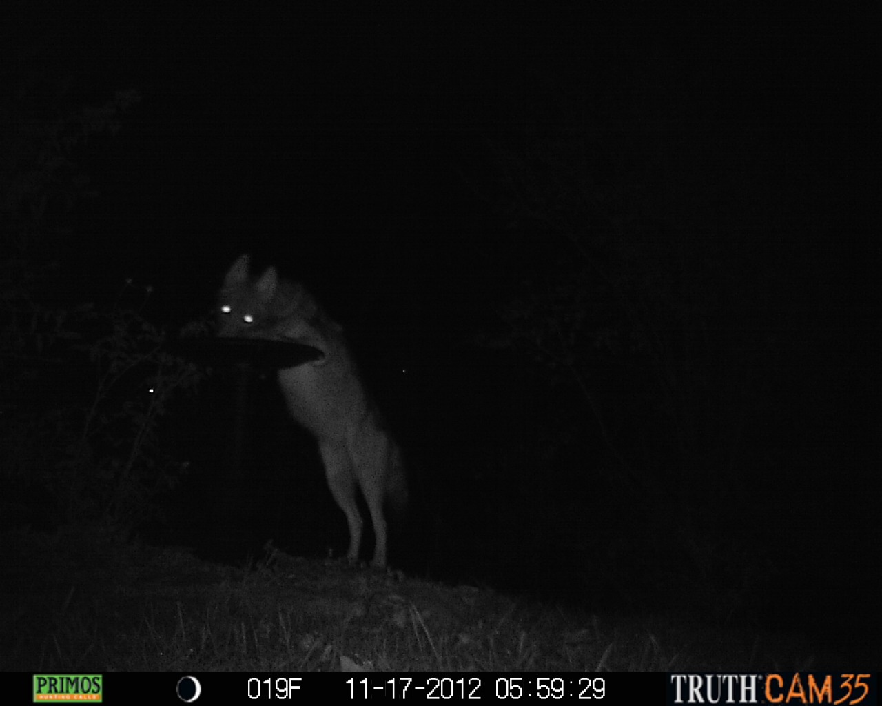 who u0027s in our yard the results of a camera trap experiment