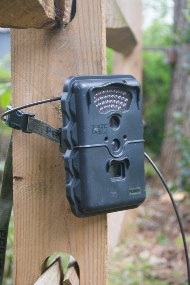 Our camera trap mounted on a fence post.