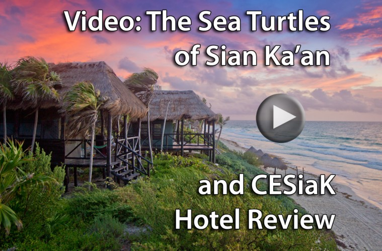 (click to play) Video: The Sea Turtles of Sian Ka'an Mexico & CESiak Hotel Review