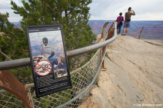 Throwing coins can kill a condor. Grand Canyon, Arizona