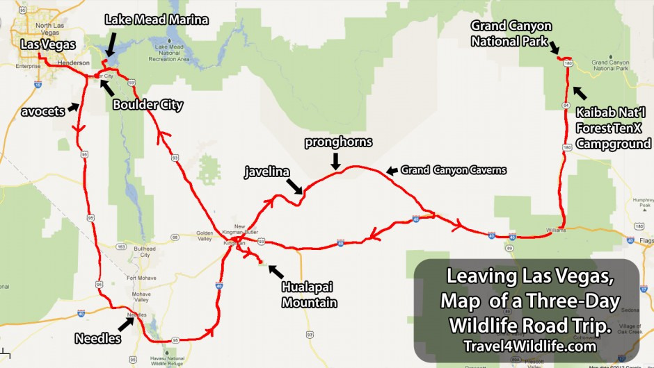 Map of my wildlife roadtrip in northwest Arizona