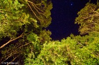 Starlight over the jungle at Puerta Calakmul