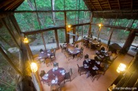 Views of the jungle from the restaurant