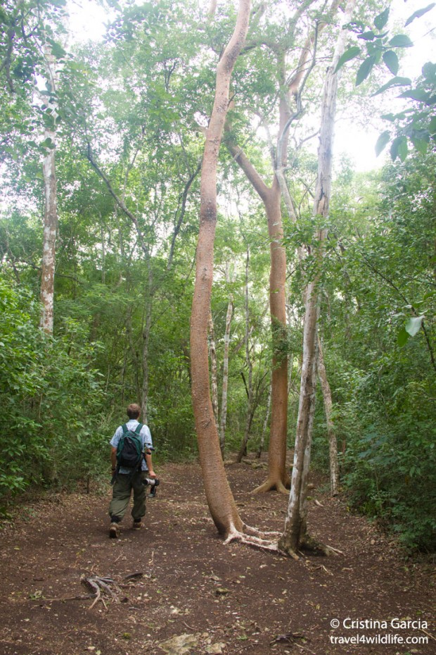 Hiking trail at Puerta Calakmul