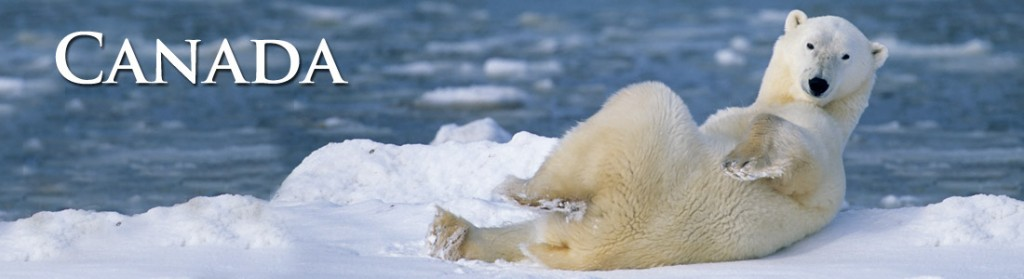 The polar bear is one of the most charismatic Canada Wildlife