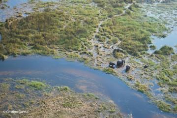 An elephant family grazing in the Okavango delta