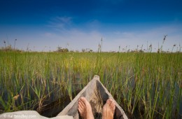 Take a mokoro trip on the Okavango Delta