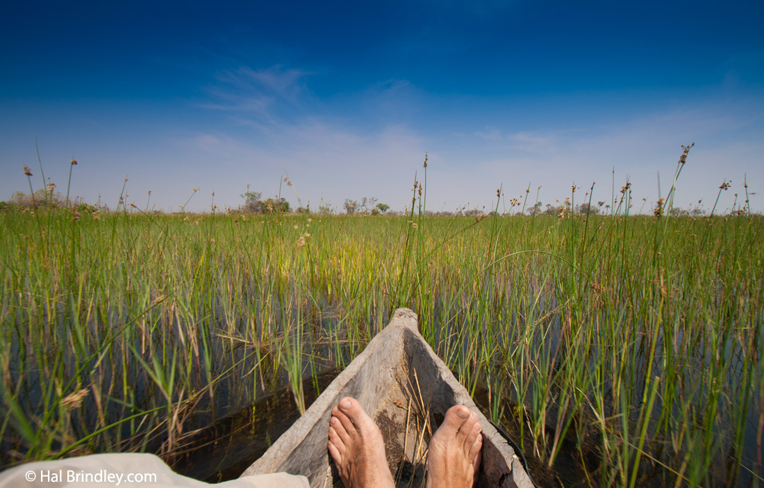 Take a mokoro trip on an Okavango Delta safari