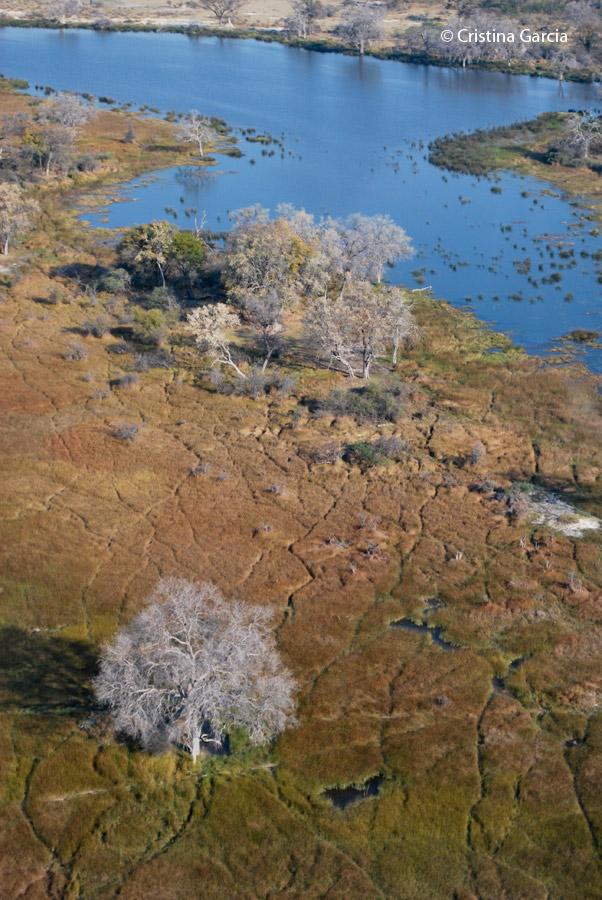 Wildlife trails across the Okavango delta