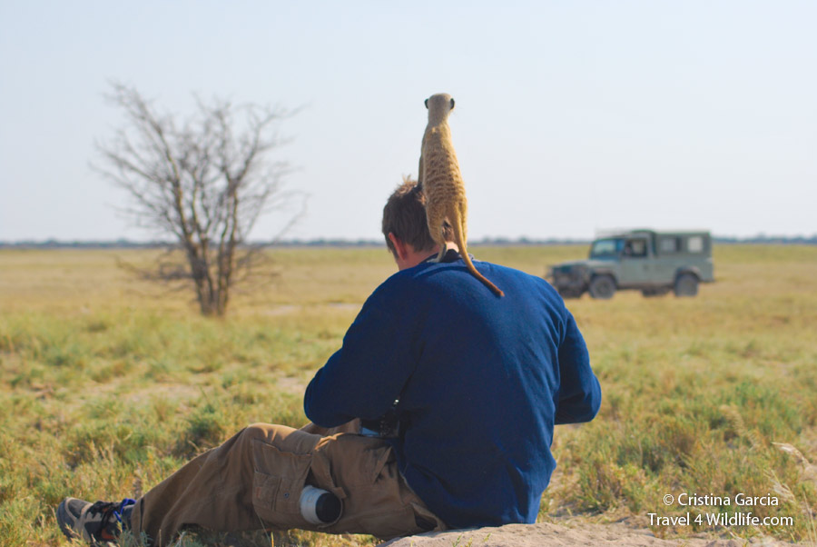 A friendly  meerkat standing on Hal's shoulder in Botswana