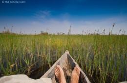 Gliding through reeds in a mokoro in the Okavango.