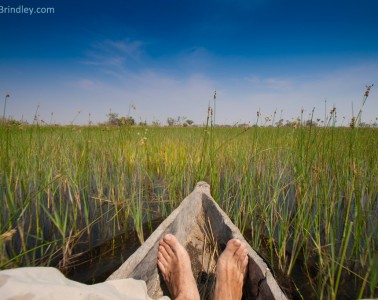 Gliding through reeds in a mokoro in the Okavango.