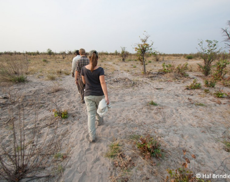 An walking safari in Botswana