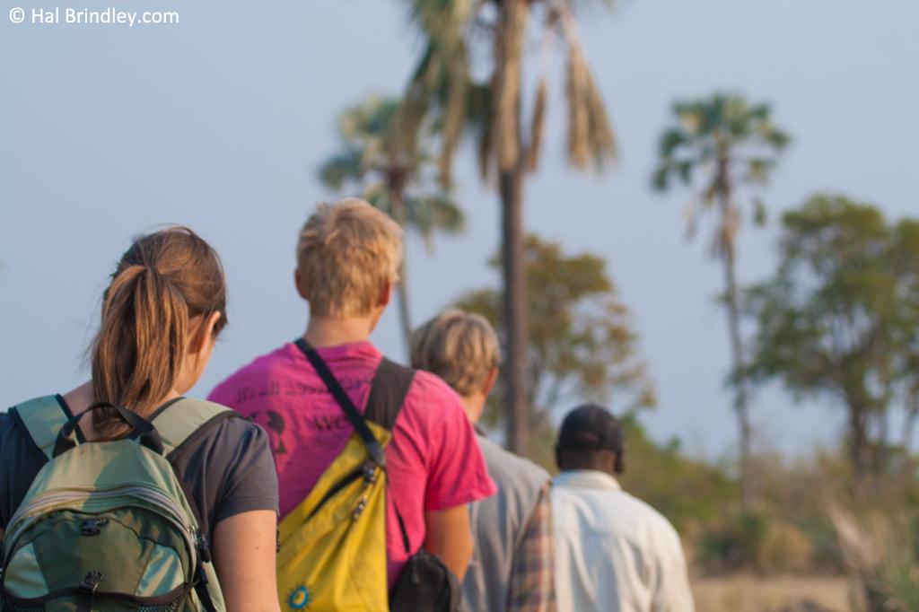 An evening walking safari on an island in the Okavango.
