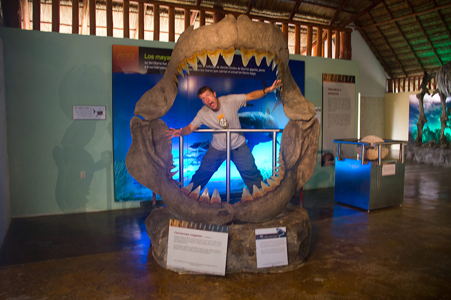 The biggest jaws in the oceans 25 million years ago