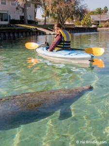 Cristina kayaking with manatees in Florida.