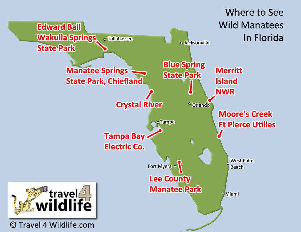 Map of where to see wild manatees in Florida