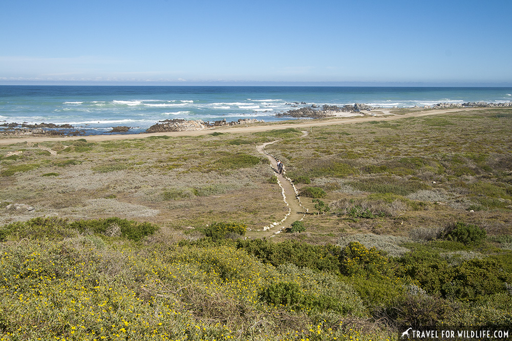path to the where two oceans meet