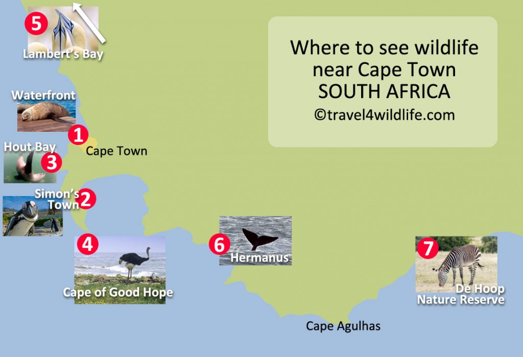 Things to do while on a safari in Cape Town