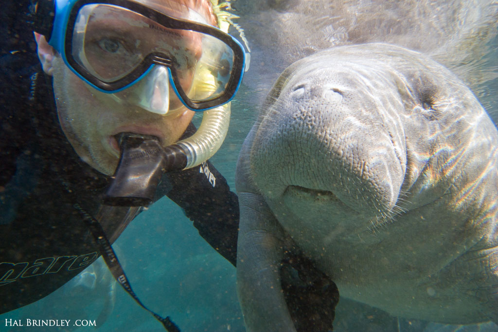 A young manatee approached Hal and didn't let him alone until they hold hands.