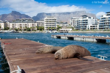 Seals resting outside Two Oceans Aquarium in Cape Town