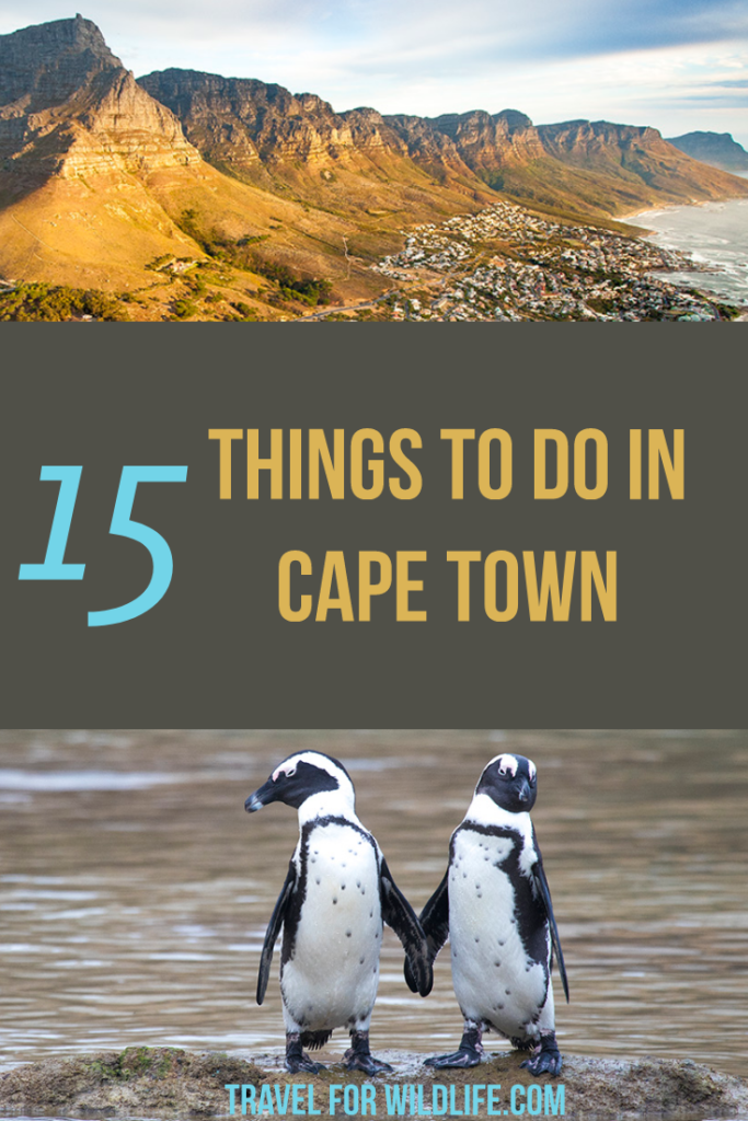 Looking for things to do in Cape Town, South Africa? We have done a lot of Cape Town activities and we can recommend these 15 you can't miss!...Snorkel with seals, visit Robben island, go whale watching, and hang out with penguins to name just a few! #capetown #southafrica