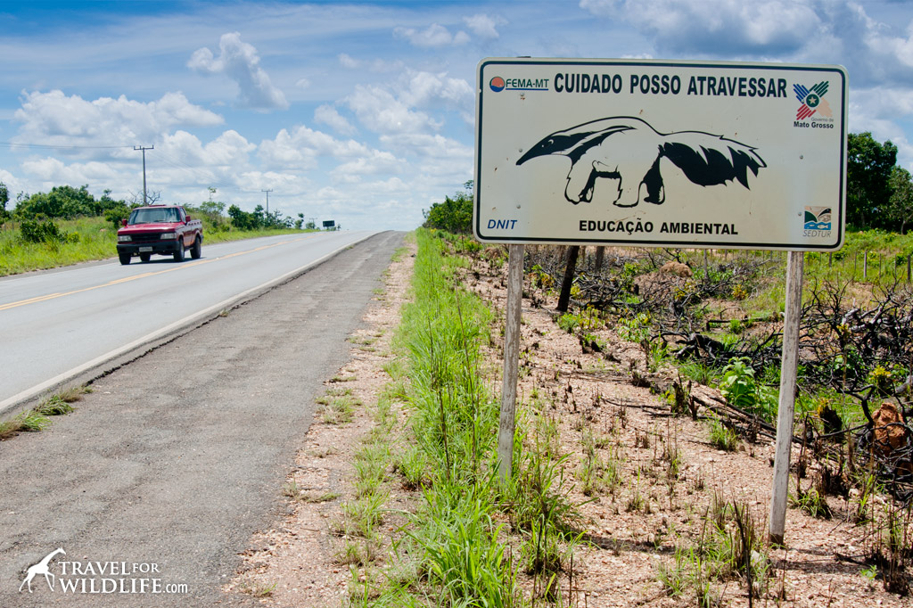 Giant Anteater crossing sign, Pantanal, Brazil