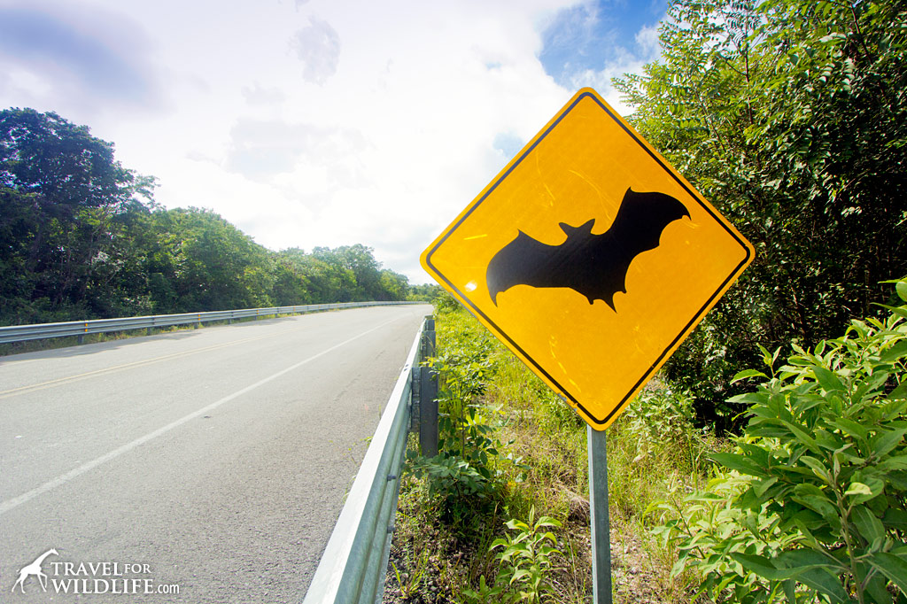 Bat crossing sign, near Calakmul, Mexico