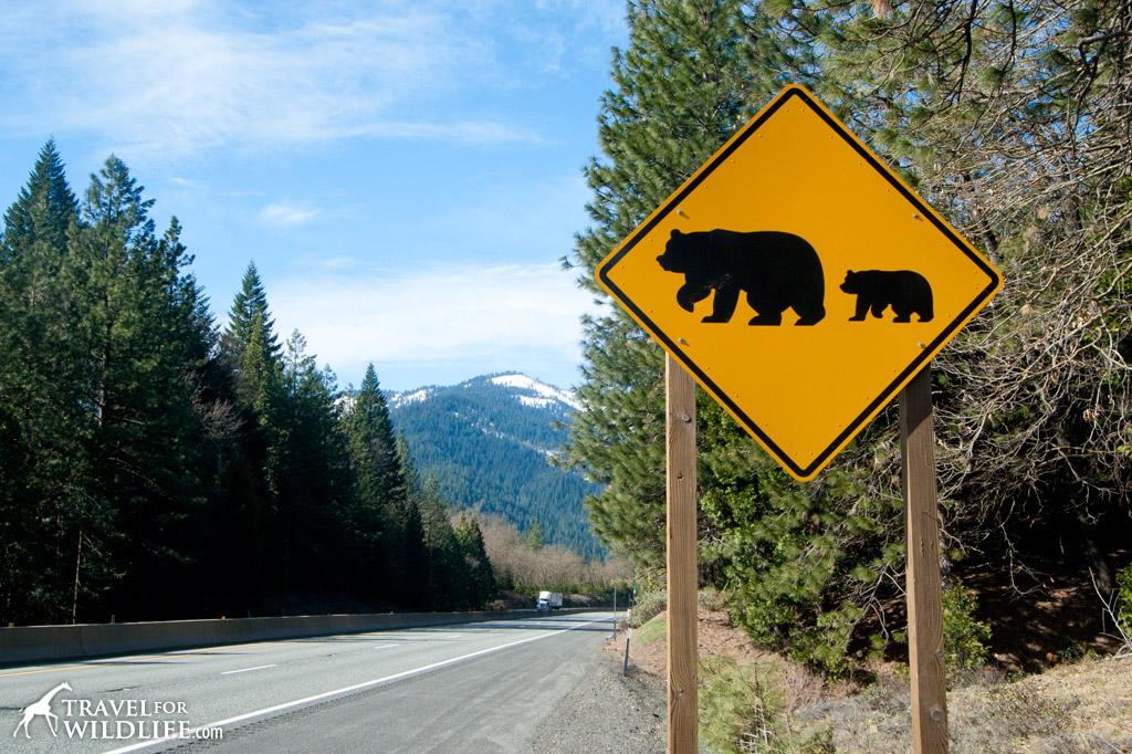 Bear crossing sign, California, USA
