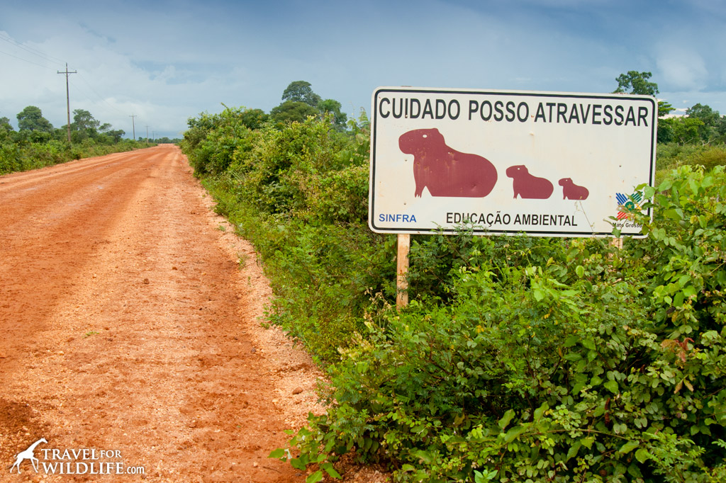 Capy Bara crossing sign, Pantanal, Brazil