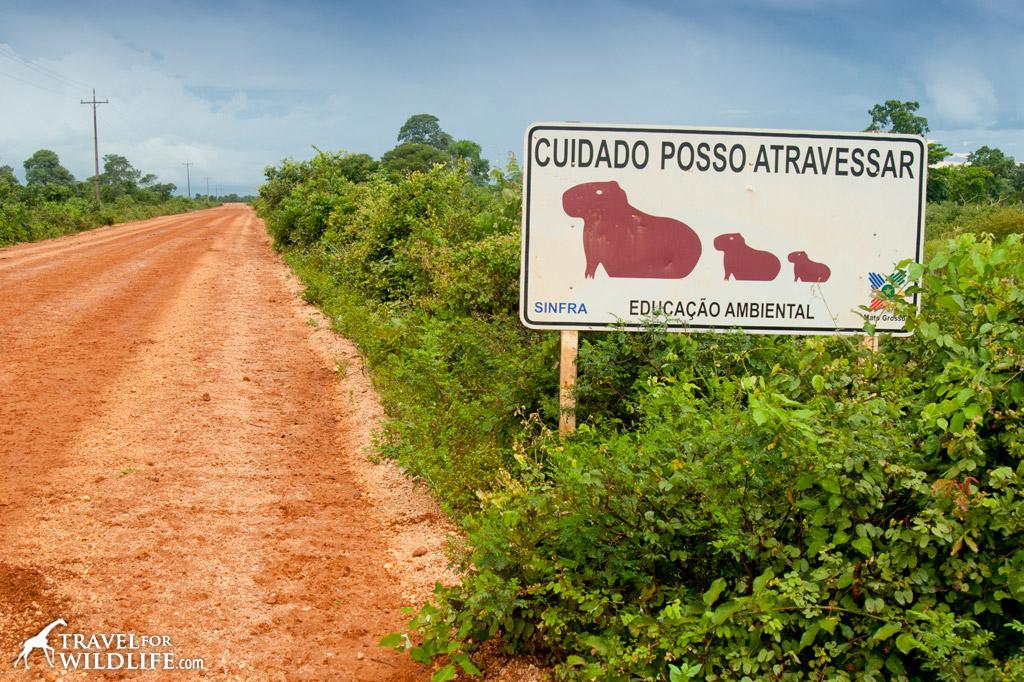Capy Bara crossing sign, Pantanal, Brazil