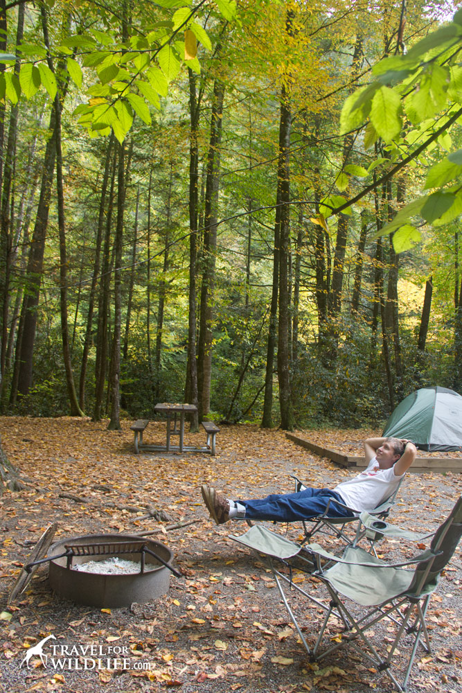 Cataloochee campground site