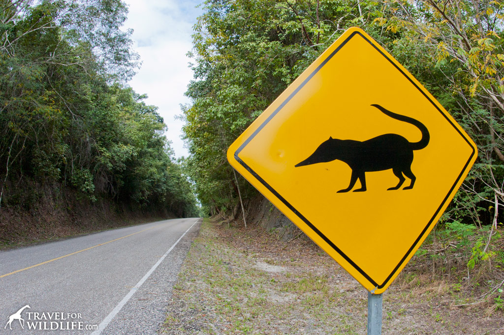 Coati crossing sign, near Tikal, Guatemala