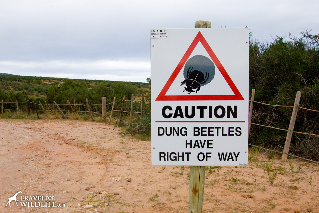 Dung Beetle crossing sign, Addo Elephant Park, South Africa