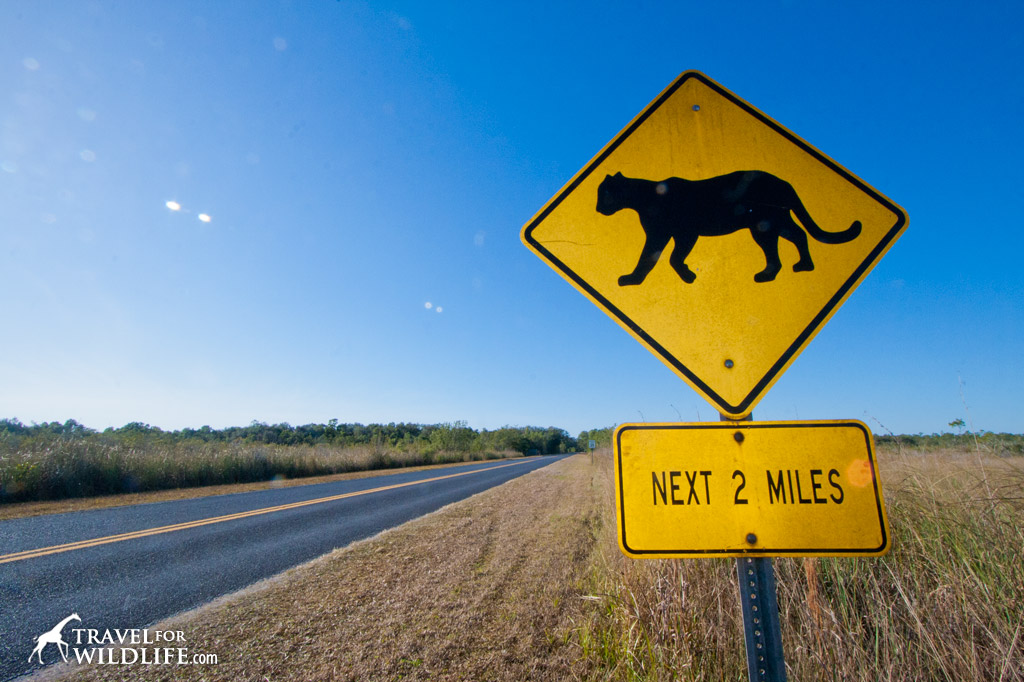 Florida Panther crossing sign, Everglades, USA