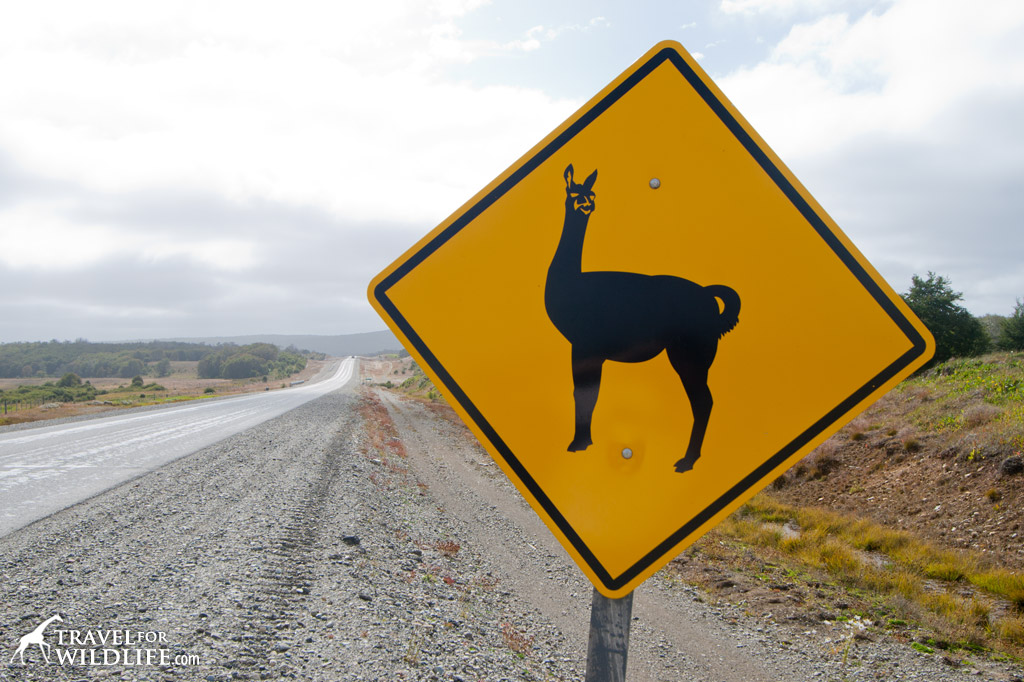 Guanaco crossing sign, Patagonia, Chile